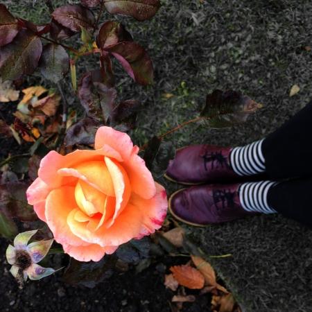 Sheffield Botanical Gardens - Rosarium 2